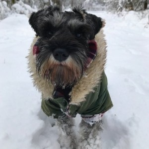 Parka Dog Coats
