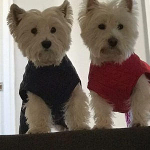 Step in Dog Coats