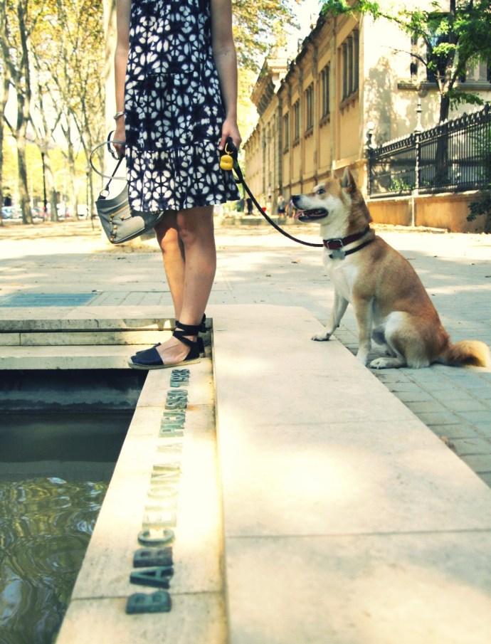 shiba_inu_doge_dog_cute_japanese_dog_bcn_style_blogger_effected