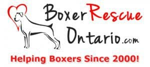 Boxer Rescue Ontario - Helping Boxers Since 2000!