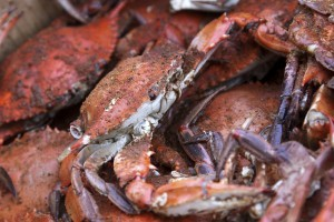 Learn about a brief history of Maryland's Old Bay Seasoning.