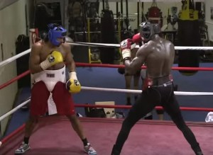 Wilder vs Haye Sparring