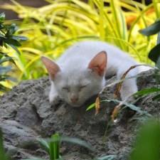 野生鳥獣とノネコの関係―ハンターとしての猫