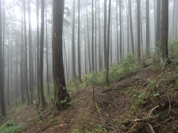 朝一番、霧の猟場