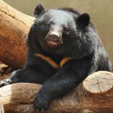 WWFのコラム「クマの保護管理を考える」の読み応えがすごい件