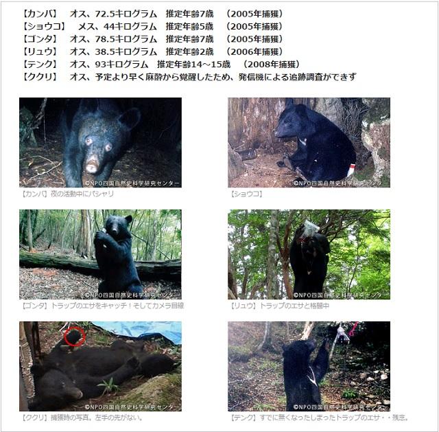 四国ツキノワグマの調査画像