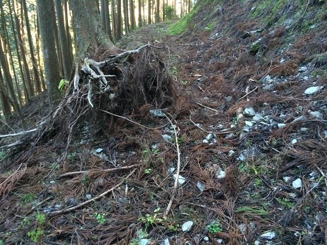 林道の倒木