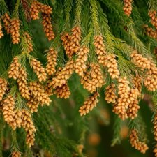 花粉症のくせに2月3月の杉林に入る猟師おすすめの花粉症薬はこちら!