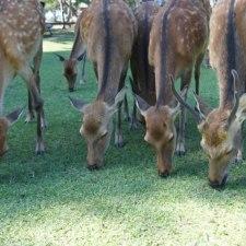 一猟期一善。Tポイント寄付で貢献する生物多様性。