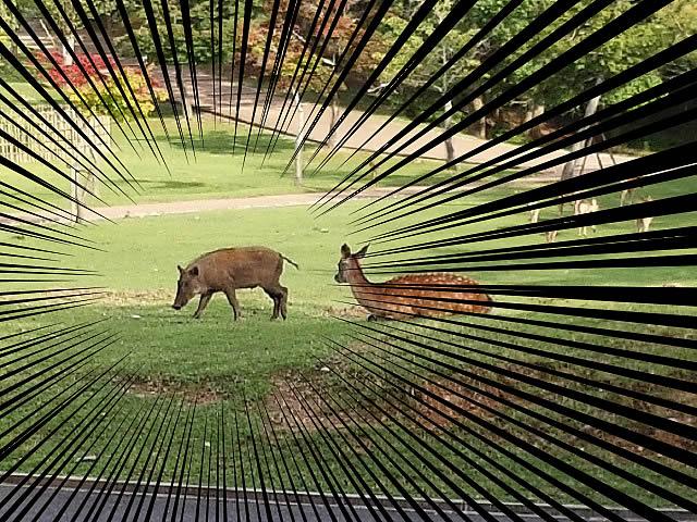 奈良公園でシカ観察?