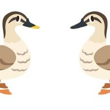 誤射注意。僕が狩猟鳥に加えて非狩猟鳥も覚えようと思った理由はこれ