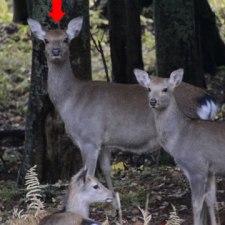 狩猟関連失敗談その8 獲物が複数いる時に考えるべきこと