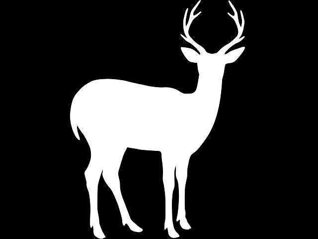 心の予行演習。あなたは白鹿を撃てますか?撃てませんか?