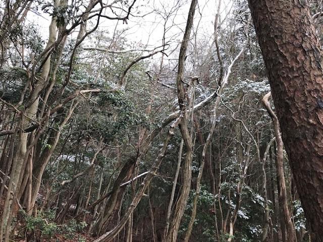 狩りバカ日誌 2019年1月21日(散弾銃・単独忍び猟)