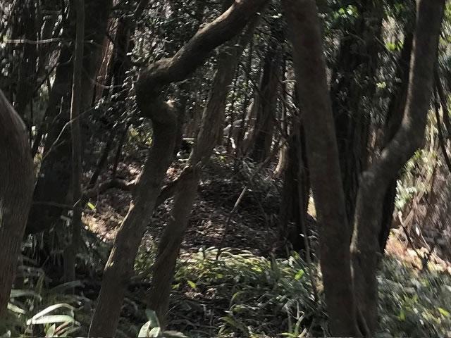 イノシシの寝屋(冬)