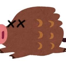 豚コレラを見つけたら?ハンターがとるべき防疫行動を福井県のマニュアルでみる