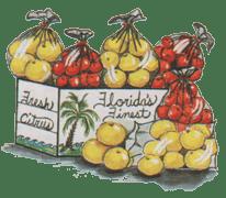 Florida orange, grapefruit, grapefruits, oranges, tangerines, navels