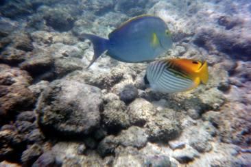 hawaiifish2
