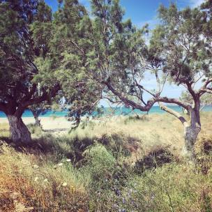 beachtrees