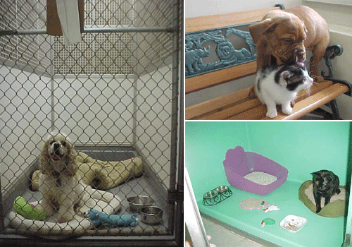 Three images of cats and dogs in the boarding kennels at Basic Pet Care Animal Hospital.