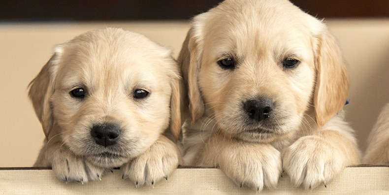 the best dog breeds