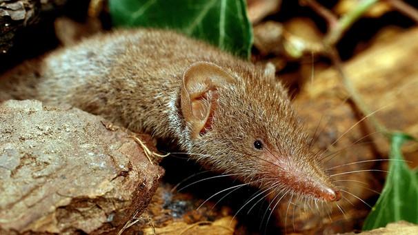 Borna: Der Virus, den Mäuse übertragen - so schützen Sie sich ...