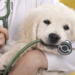 annuaire vétérinaire