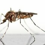 Anti-moustique : conseils et solutions pour lutter
