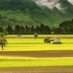 Lotissement-lanta-jonquieres : vente de terrains viabilisés à Lanta