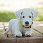 GuideduChien : des conseils pour prendre soin de votre chien