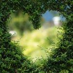 Jardin Extraordinaire : de meilleurs conseils avisés sur le jardinage