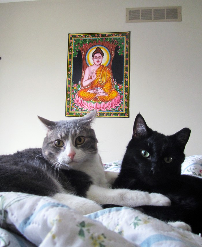 February 10th. Doogie and Kitty and the Buddha.