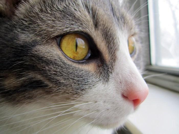 February 18th. Closeup of Kitty.