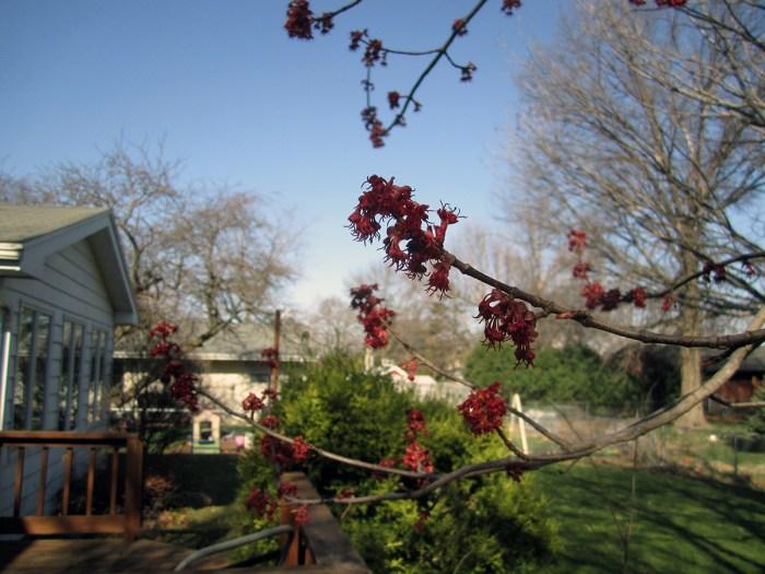 March 31st: Budding tree.