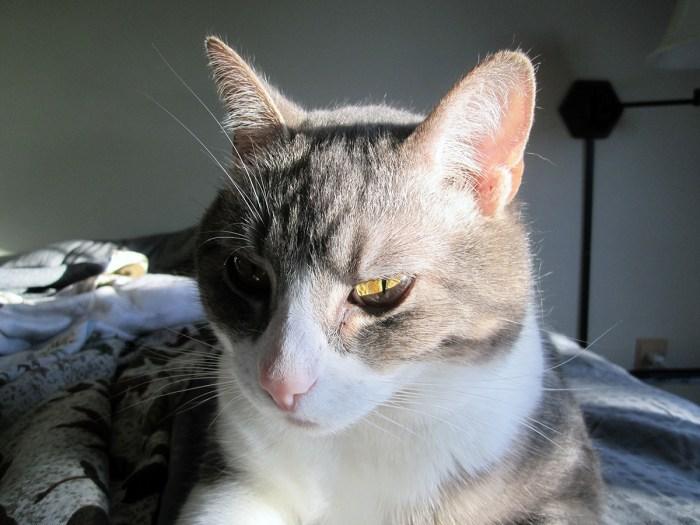 April 23rd: Kitty