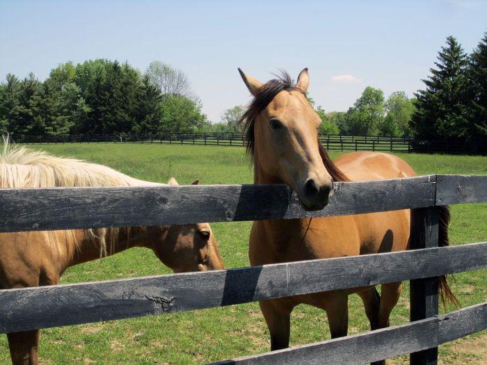 May 19th: Horses. Up close and personal.