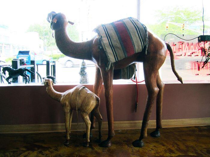 May 19th: Camels