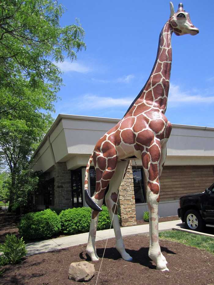 May 24th: A giraffe