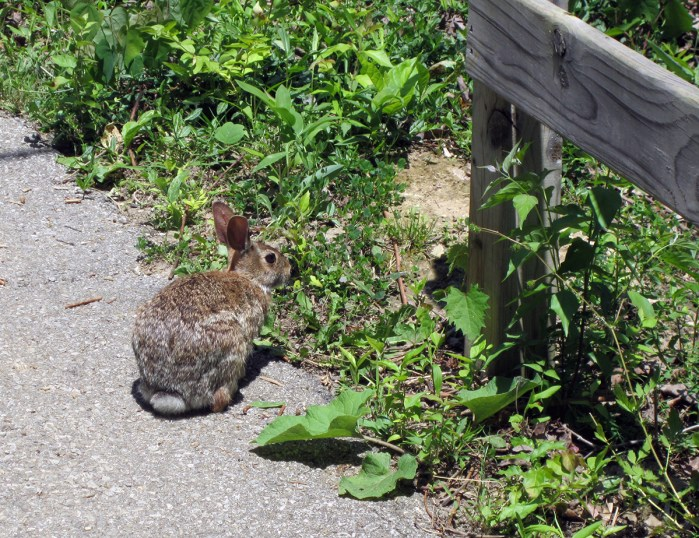 May 23rd: A bunny