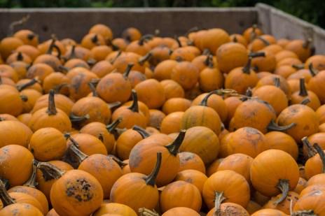 Oct. 14th: Pumpkins