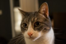 Jan. 4th: Kitty