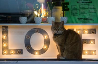 Dec. 17th: Kitty in Window