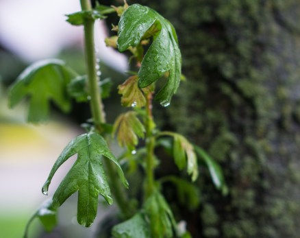 May 11: Wet Leaves