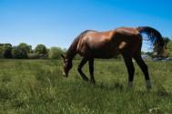 May 25th: Horse