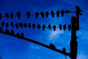 June 17: Birds Near Central Park