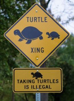 Oct 29: Turtle Crossing