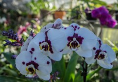 Feb 24: Orchids at IMA