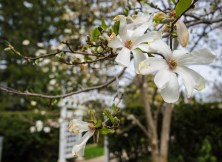 April 4: Arbor
