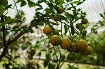 April 9: Tiny Oranges