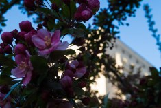 April 19: Flowering Tree and Monument